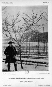 (Cotoneaster dans l'arboretum en 1889)
