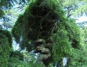 L'arbre aux pagodes