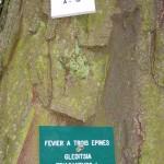 Plaques sur un arbre du jardin anglais