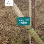 Plaque d'identification d'un arbre planté