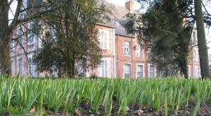 (Tulipes sauvages près du chateau en 2008)
