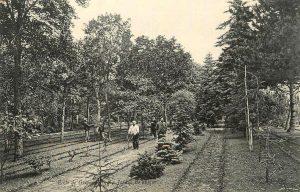 (Jardin dendrologique au début du XXe siècle)